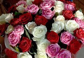 نتيجة بحث الصور عن صور ورد بلدى Rose Petals Craft Dried Rose Petals Rose