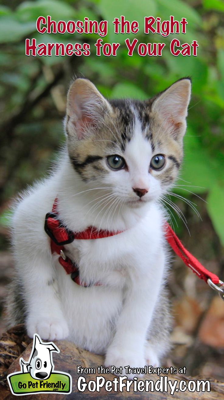 Choosing The Best Cat Harness Gopetfriendly Com Updated 2019 Best Cat Harness Cat Harness Adventure Cat