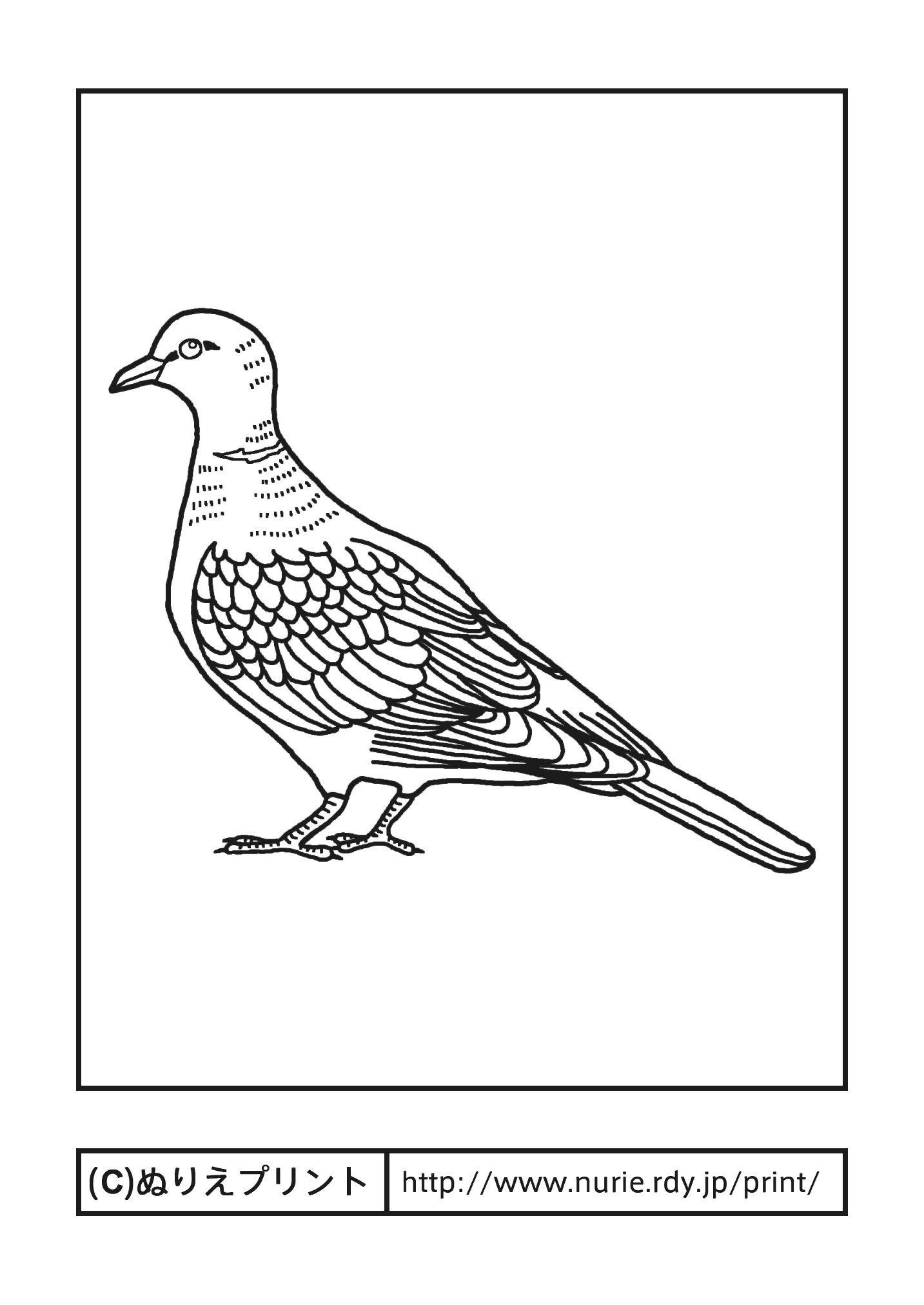 シラコバト白子鳩主線黒埼玉県の鳥無料塗り絵都道府県ぬりえ