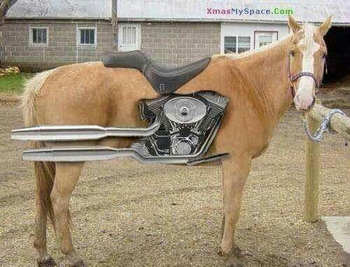 Pin By Vs On Harley D With Images Horses My Ride Riding