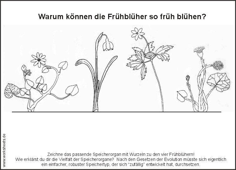 Frühblüher Domino Sachunterricht Grundschule Pinterest