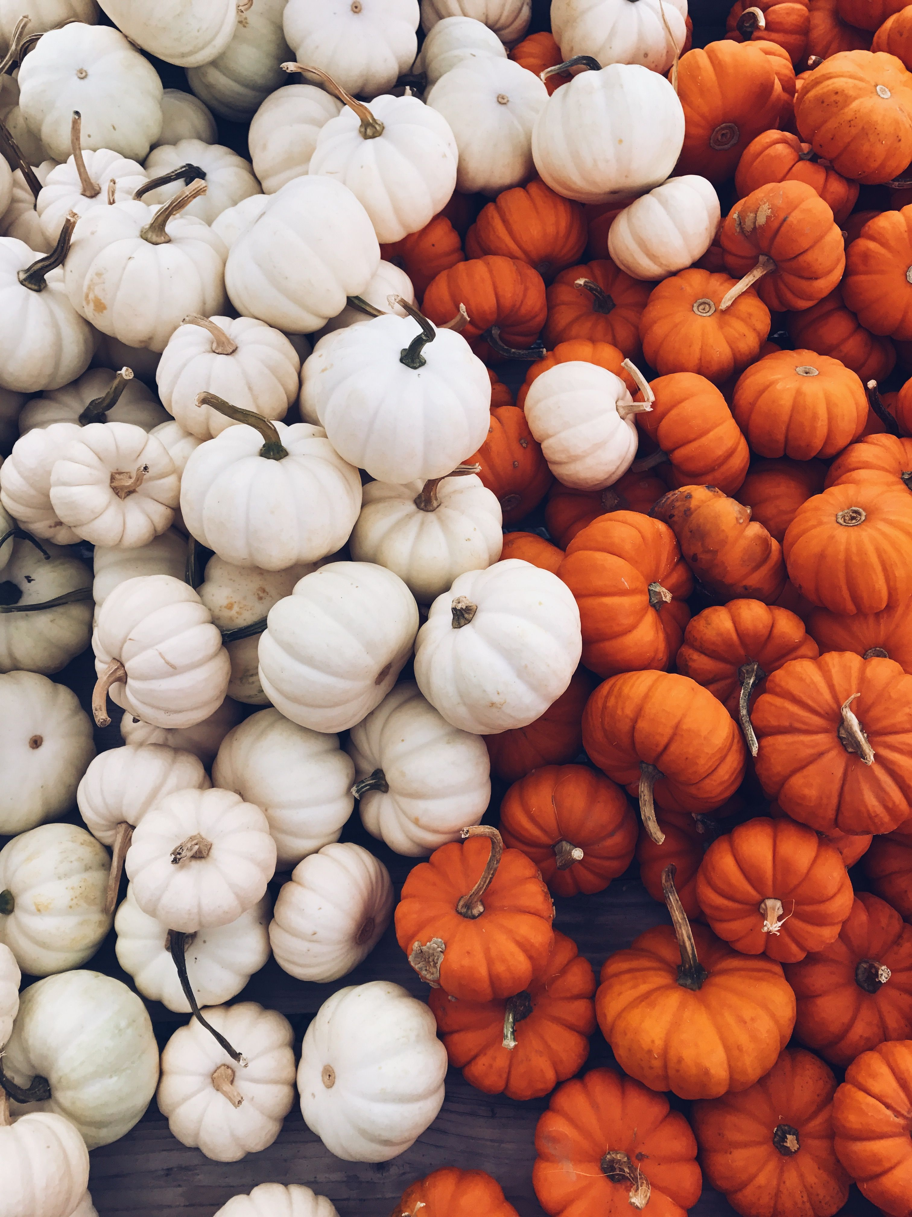 Cute pumpkins Autumn photography, Fall backgrounds