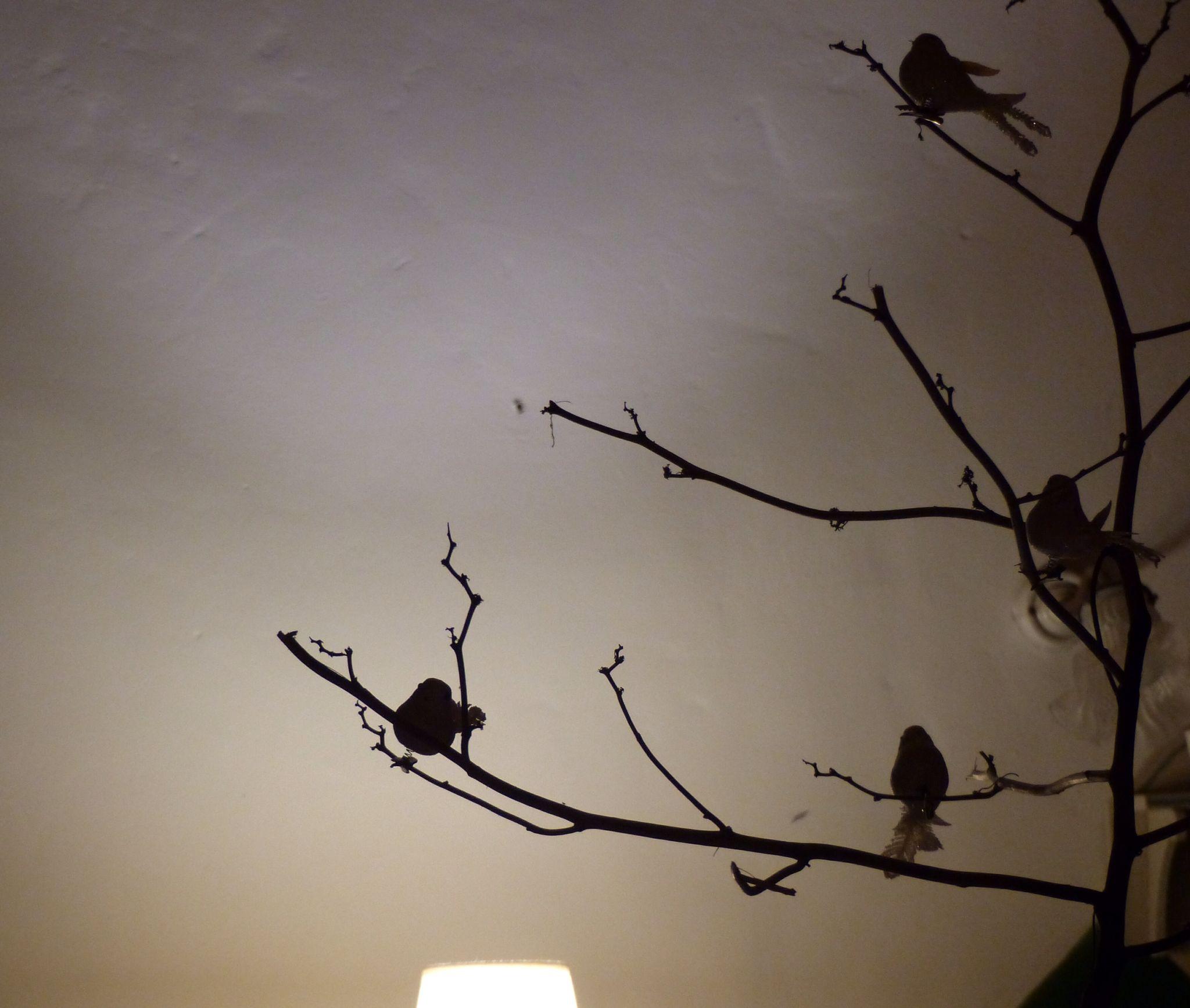 Oiseaux dans mon séjour