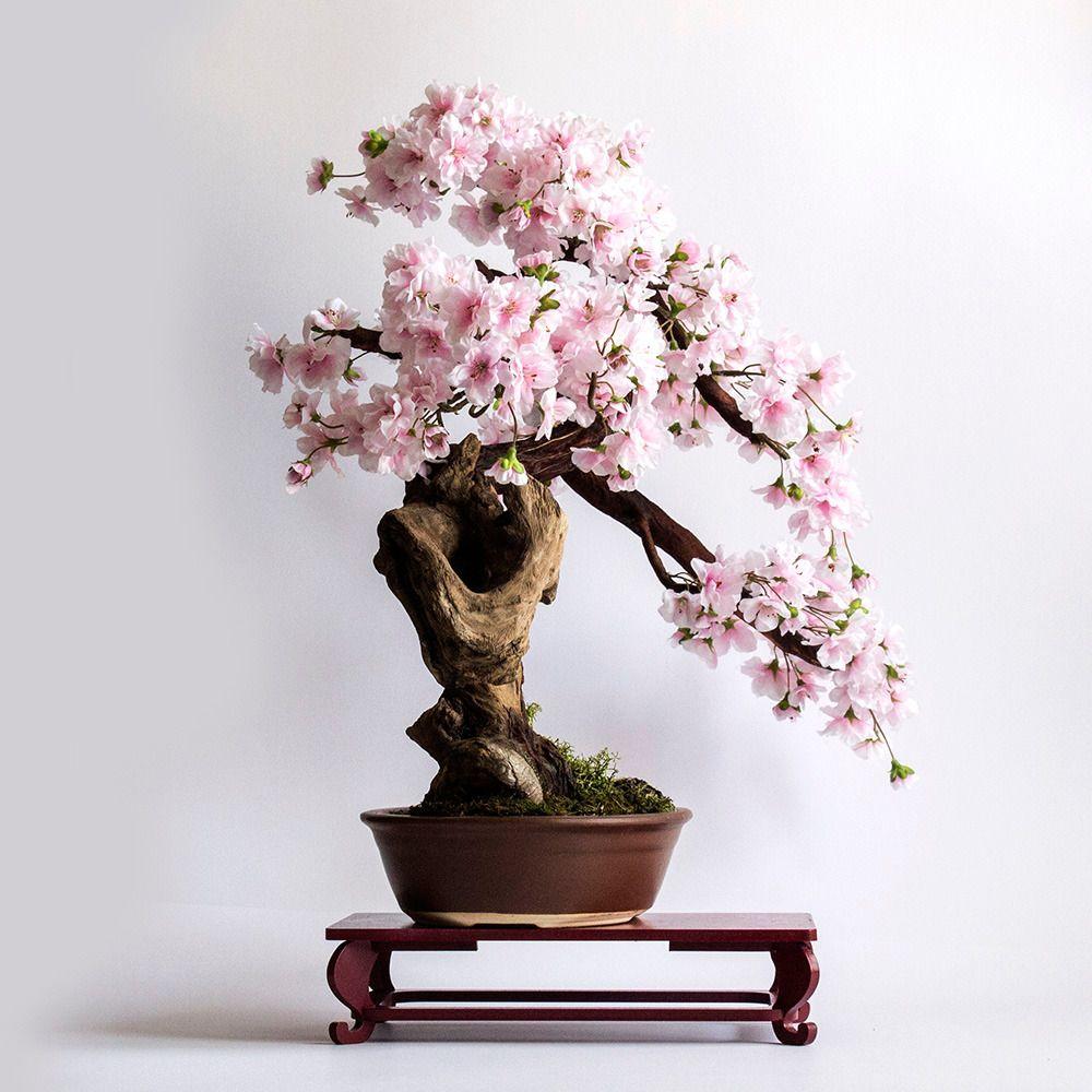 Bonsai Sakura Bonsai Tree Types Bonsai Art Bonsai Tree
