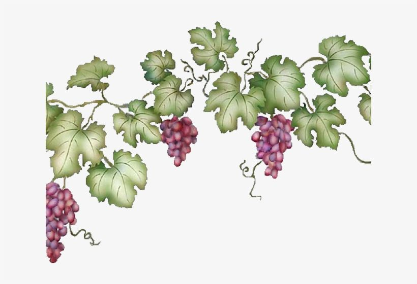 Transparent Vine Decorative Element Png Picture Png 4251 5163 Vinograd Cvety Botanicheskie Printy