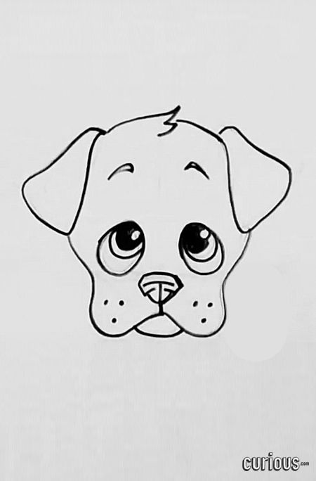 Learn How To Draw A Cute Cartoon Puppy Face With Images Puppy