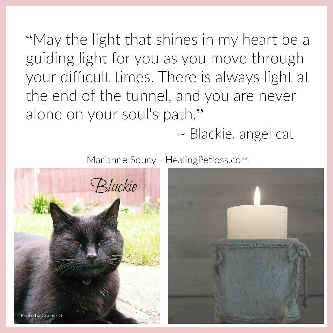 Pin by Healing Pet Loss on Healing Pet Loss Podcast | Pet