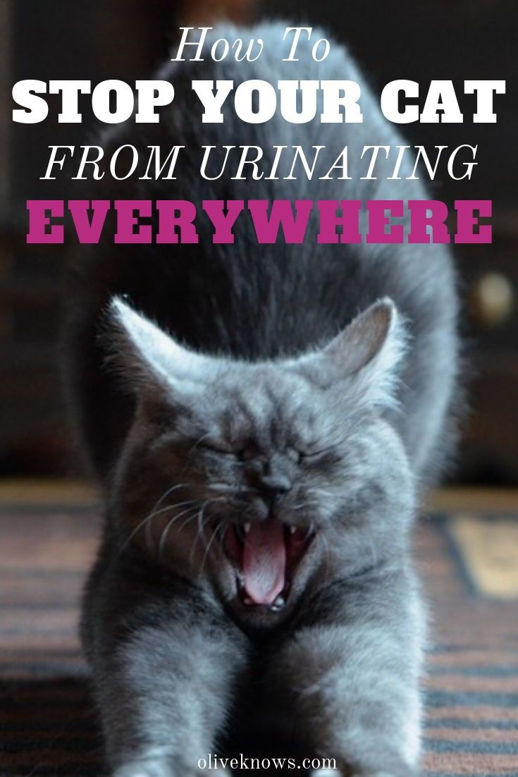 How to stop your cat from urinating everywhere cat