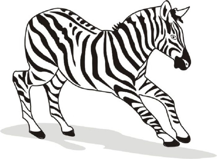 awesome Zebra Coloring Pages Images