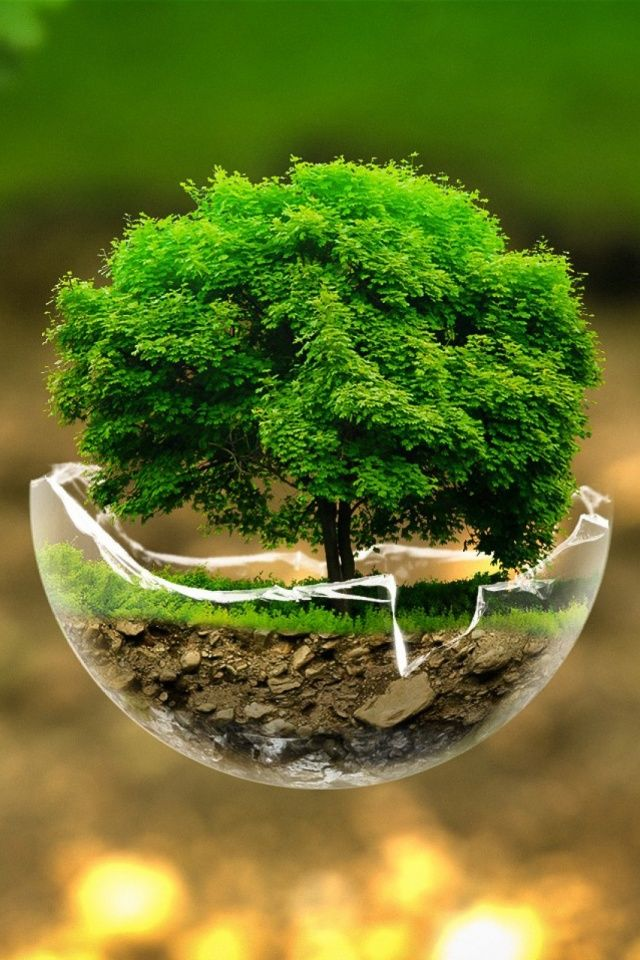 Green Nature Tree Mobile Wallpaper - Mobiles Wall in 2019  Tree