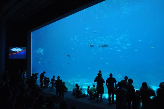The world's largest aquarium and only home to the whale ...