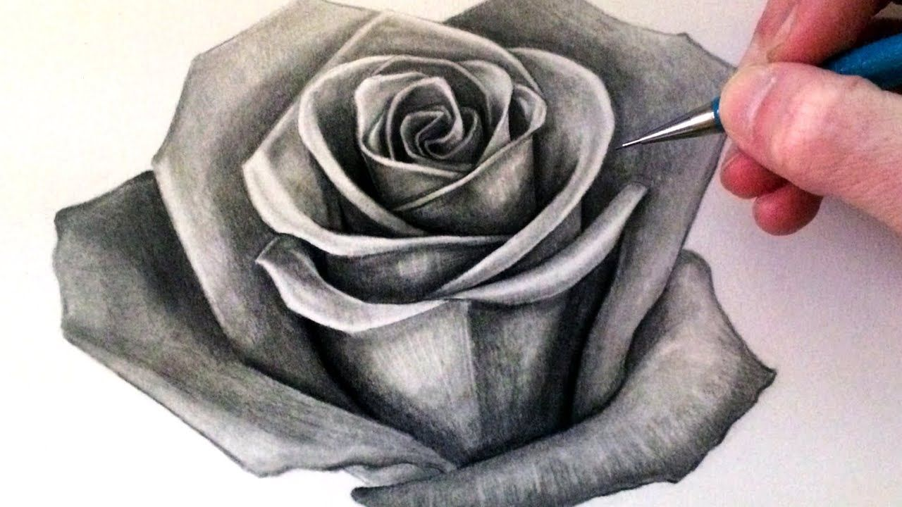 How To Draw A Rose Youtube Realistic Rose Drawing Roses Drawing Rose Drawing