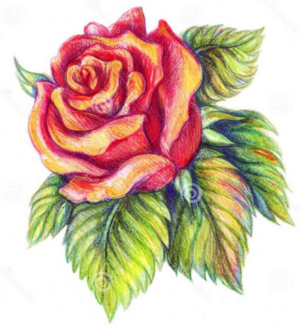 Flower Drawings 42 Amazing Designs Images With Color Color Pencil Sketch Flower Sketches Flower Sketch Pencil