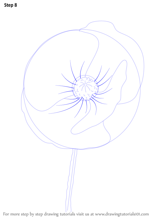 Learn how to draw poppy flower poppy step by step drawing learn how to draw poppy flower poppy step by step drawing tutorials mightylinksfo