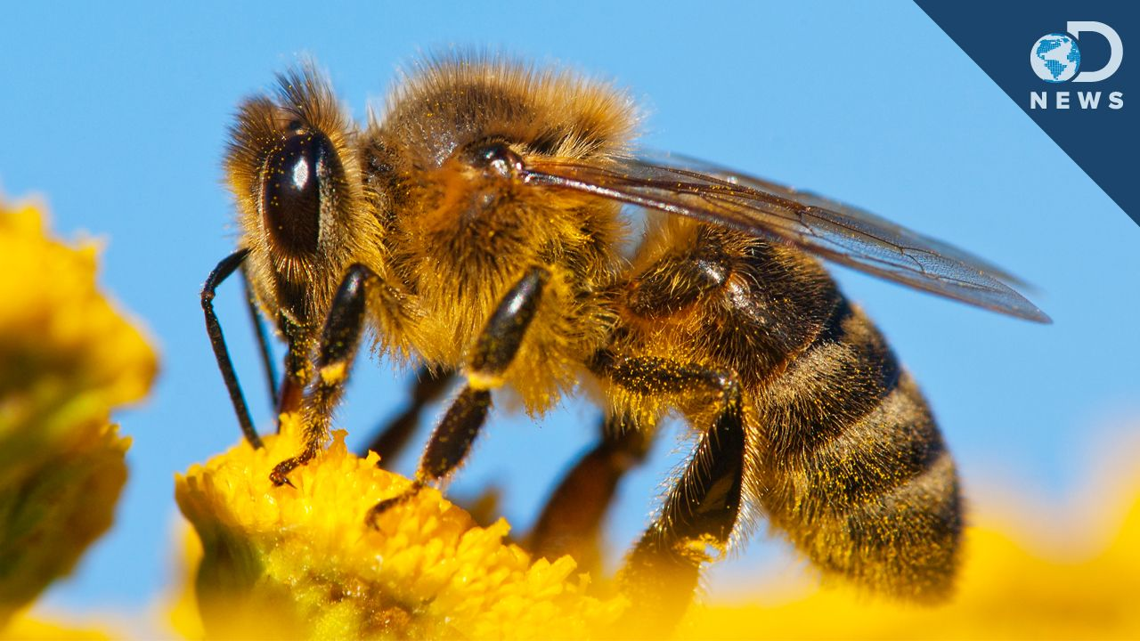 World's Most Popular Weed Killer Linked To Decline Of Honey Bees