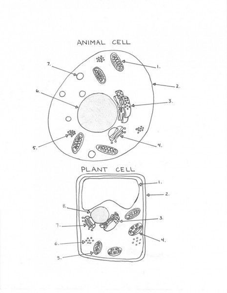 Plant And Animal Cell Diagram Worksheet Cell Diagram Plant