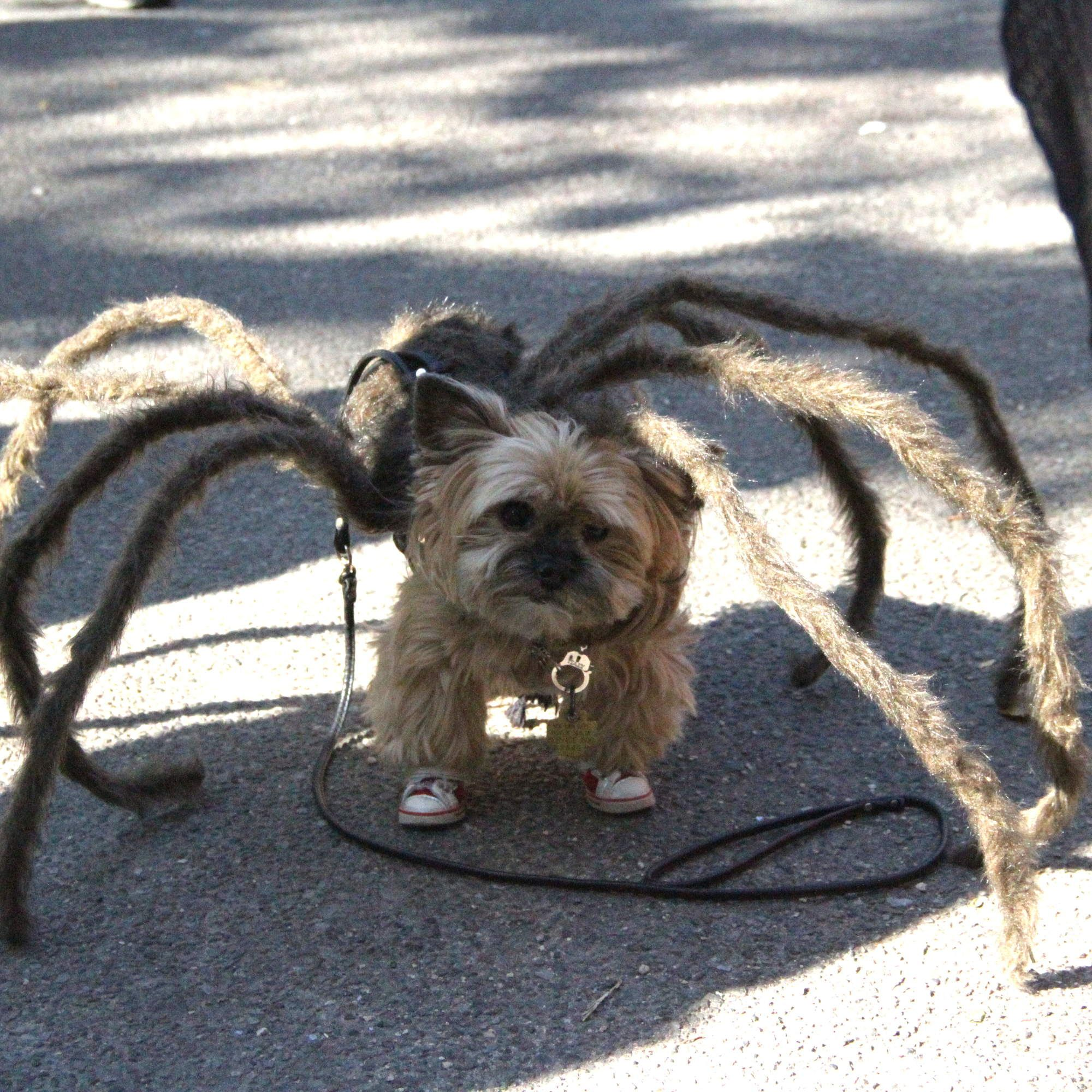 the 50 best costumes at the tompkins square park halloween dog parade via http east villagebest - Halloween Parade East Village