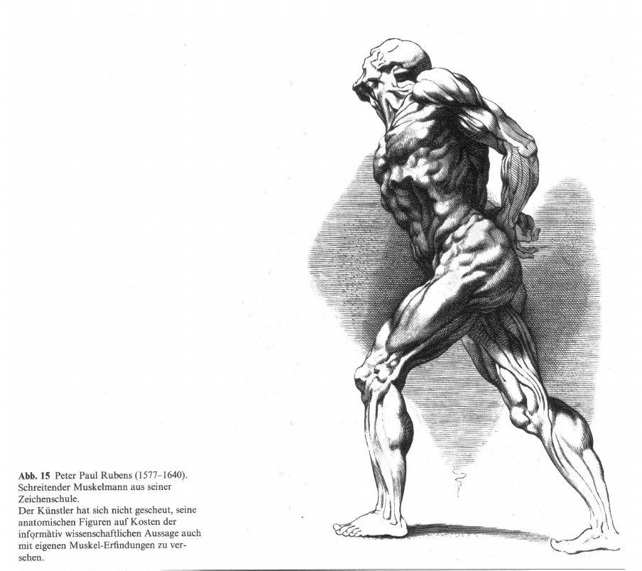 Ausgezeichnet Anatomie App Für Künstler Ideen - Menschliche Anatomie ...