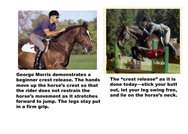 Horse Jumping Release The Crest And Automatic Release In Jumping