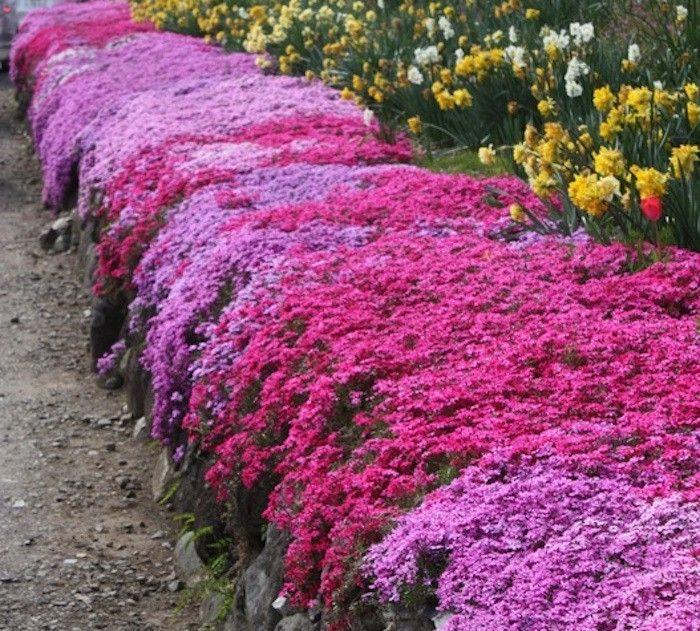 Plante couvre sol un tableau de couleurs naturelles dans votre jardin jardins - Couvre sol jardin japonais ...