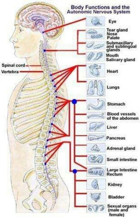 Body pain | anatomia | Pinterest | Masaje, Salud y Kinesiologia