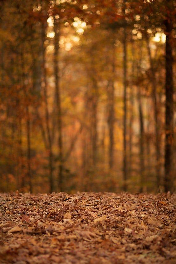 Fall Digital backdrop,  Digital Backdrop,  Digital Background, Autumn trails, Leaves, Fall Dreamy Ba