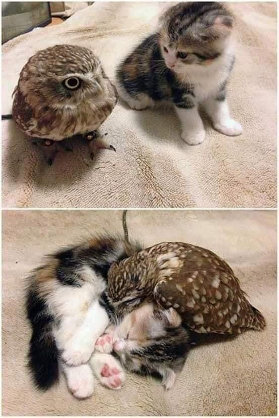 chat et chouette | Animaux les plus mignons, Image chat drole, Créatures mignonnes