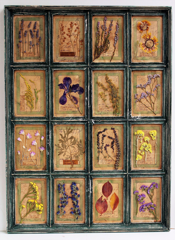Gepressten Blumen Herbarium gepresste Hasenschwanz Kunst 3022 cm (7556 cm) Gepre…