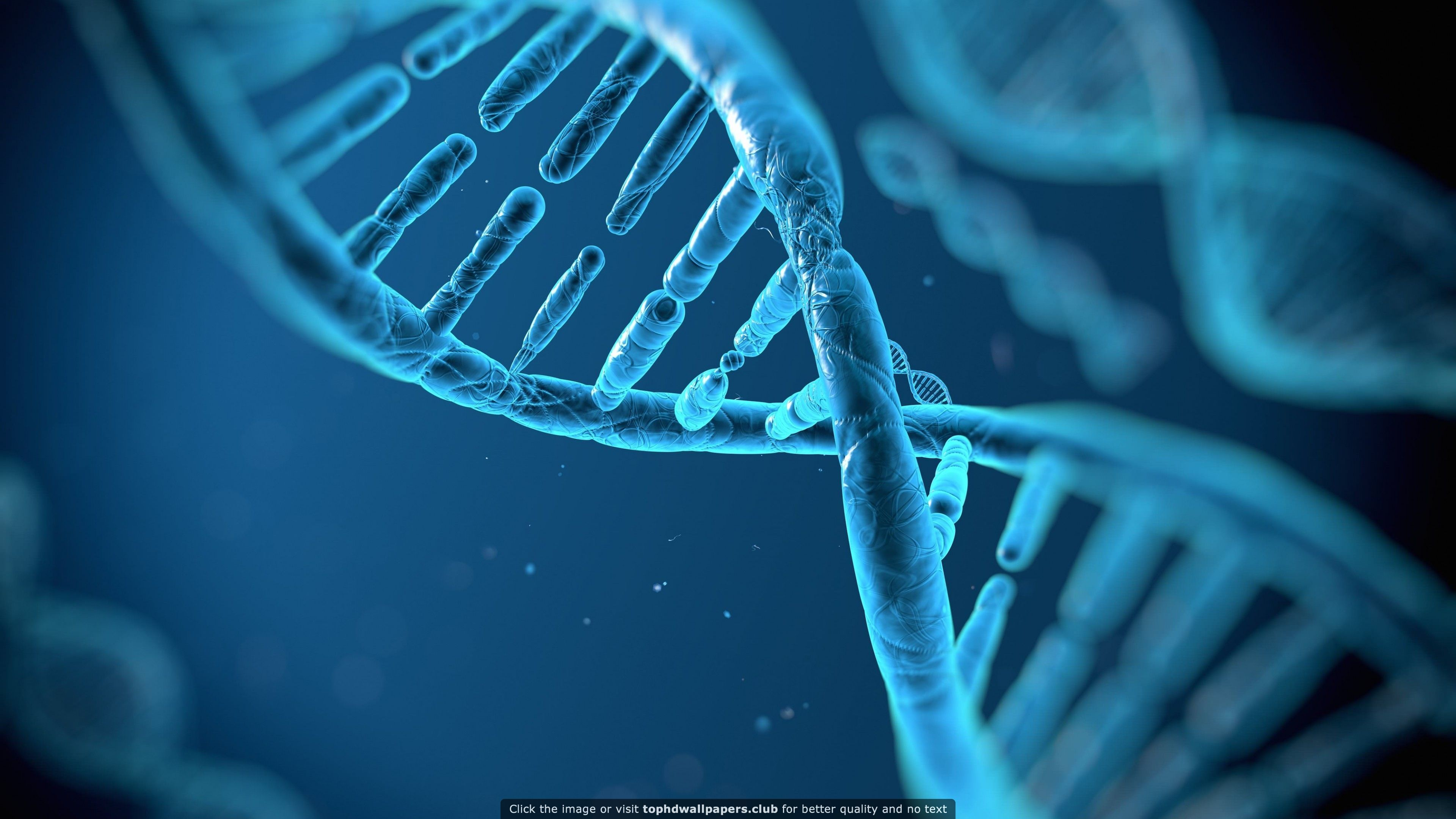 Dna Structure Hd Wallpaper For Your Pc Mac Or Mobile