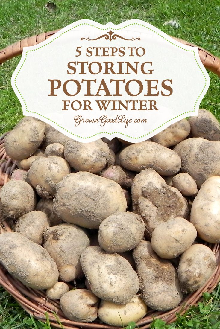 Do you grow your own potatoes or buy in bulk from a farmer market? Follow these 5 easy steps to storing potatoes in a basement, root cellar or other cool areas in your home or garage for winter to keep your potatoes fresh.
