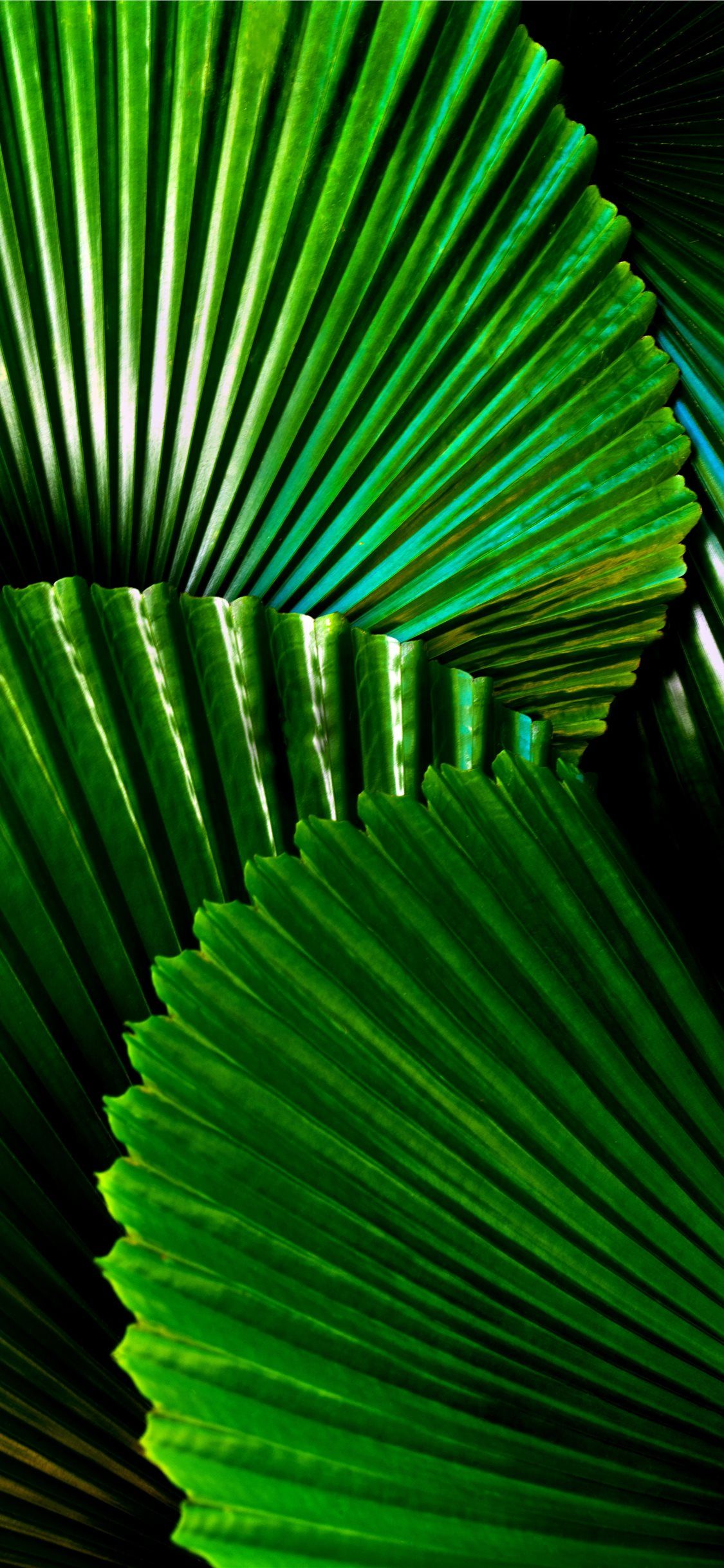 Free download the green leafed plant Wallpaper wallpaper