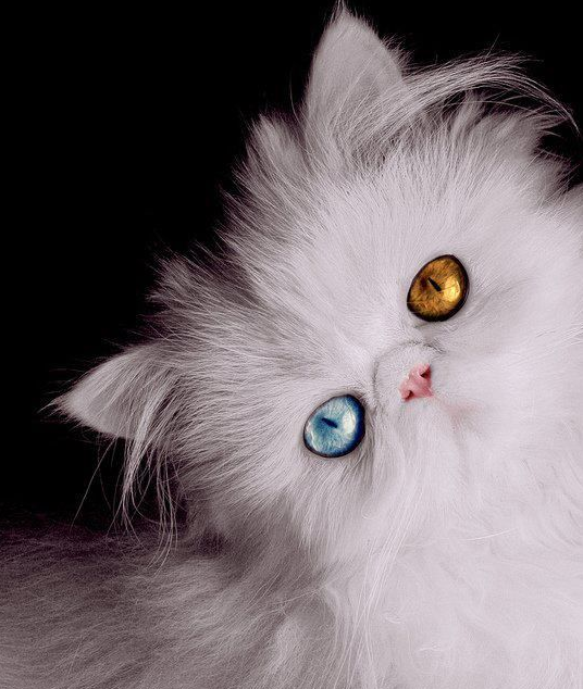 WOW!!!!! Cats, Pretty cats, Beautiful cats