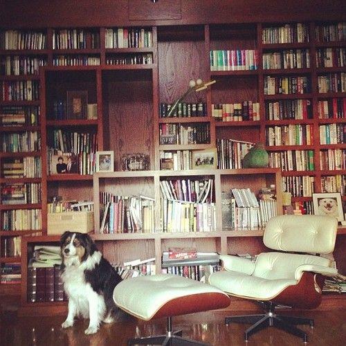 Dog Eames Bookshelf Wall DONE