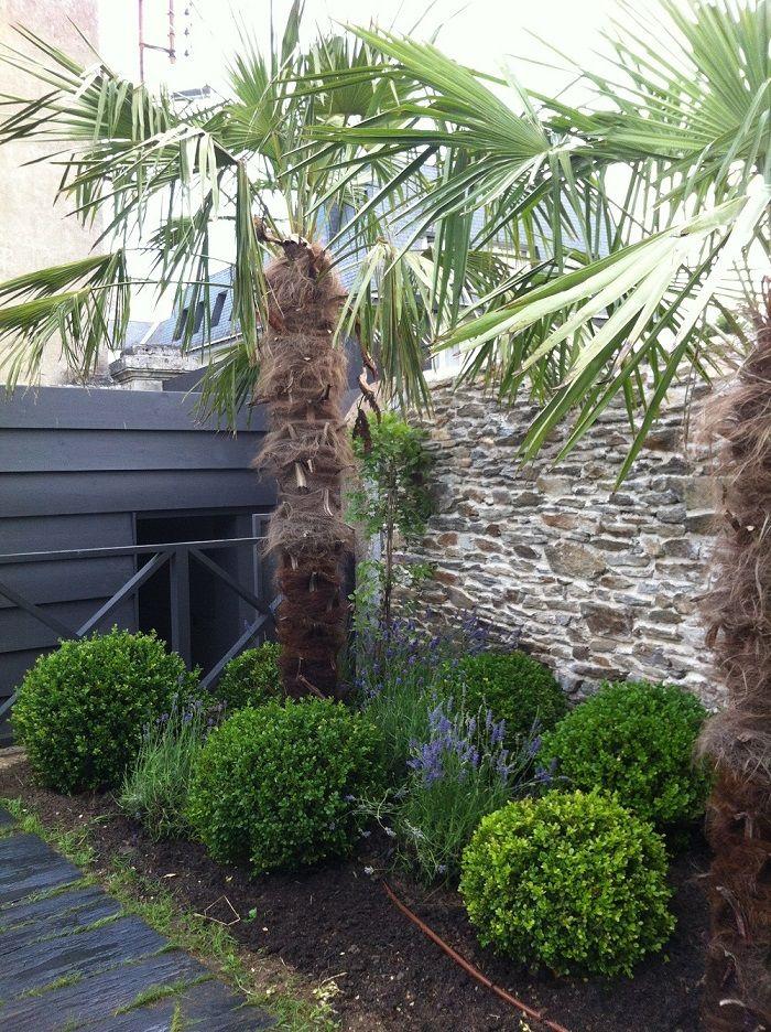 Jardin buis palmier et lavandes decoration jardin pinterest buis palmiers et lavande - Massif avec palmier ...