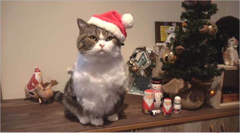 마루와 하나의 크리스마스 크리스마스 고양이 블로그
