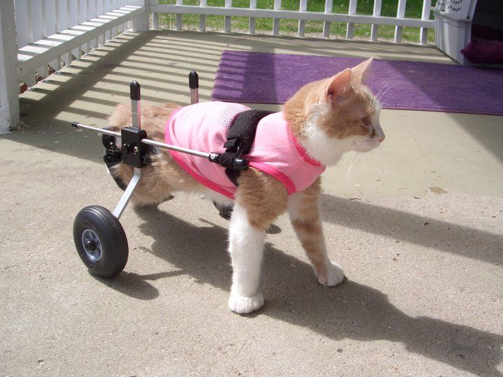 Image result for people in wheelchairs and holding cats