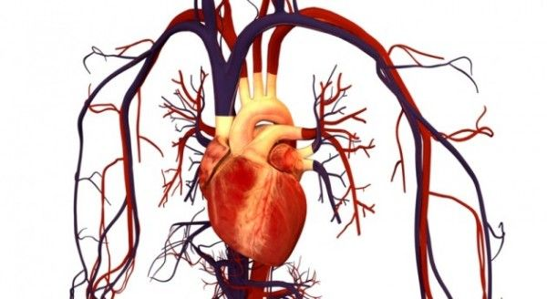 Atrial fibrillation (AF) is the most common type of arrhythmia which can be triggered by various stressful events. About 30 percent of people who have undergone a cardiac operation suffer from post-operative AF afterward. There are a lot of drugs available to treat the condition; however, they come