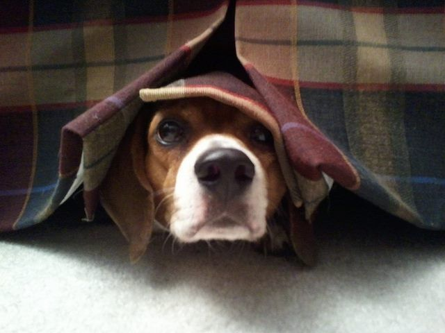 Fall calls for more thunderstorms. If your pup suffers from fear of storms, purchase a #CalmingCoat and put those stress and nervous feelings at ease! Learn more: http://www.calming-coat.com/
