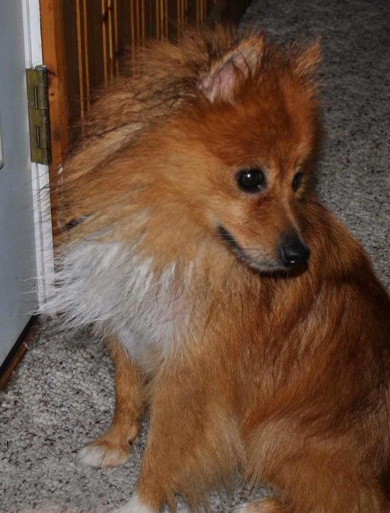 Adopt Missy ADOPTED!!! on Small dog rescue, Dog rules