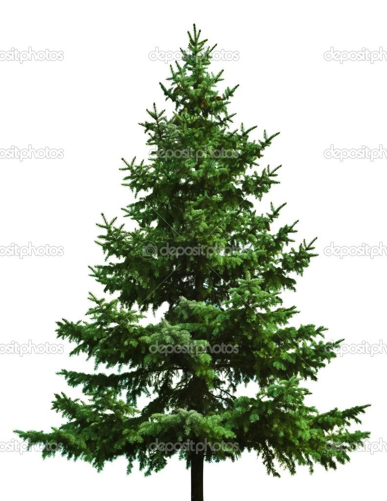 Different types of christmas trees pictures - There Can Be A Big Difference Between Different Types Of Christmas Trees Some Are Not