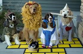 Image Result For Springer Spaniel Halloween Costume Cute Dog