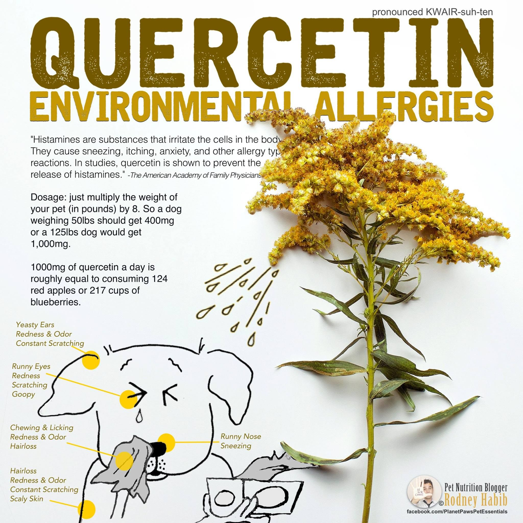 Pin on Allergy Relief Ideas