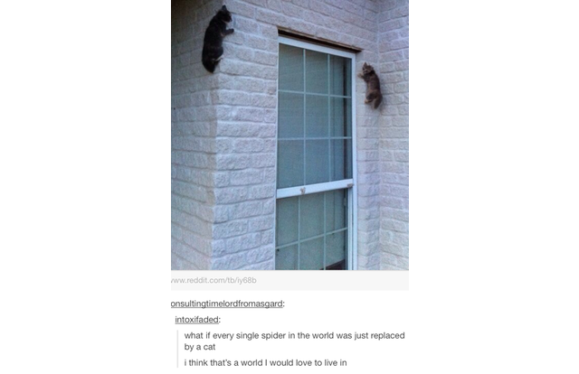 35 Hilarious Tumblr Posts That All Cat Owners Know To Be True (Slide #52) - Pawsome