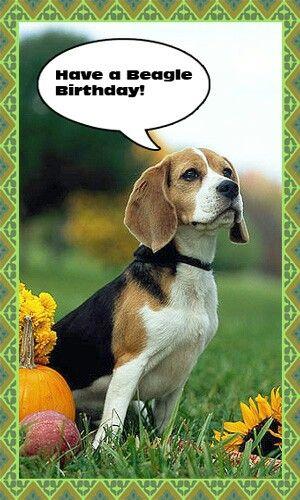 Birthday Beagle Wishes Beagle Beagle Dog Animal Birthday