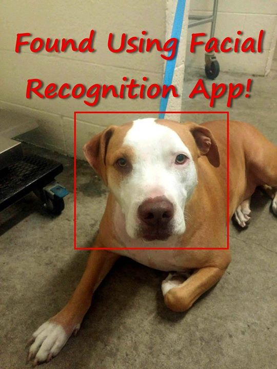 Finding Rover app helps Front Street Animal Shelter