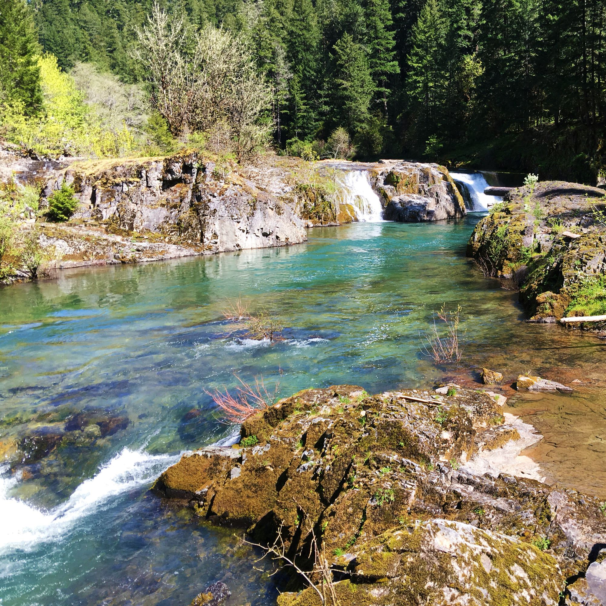 Steamboat Falls Umpqua River Oregon Waterfall Hiking Camping Forest