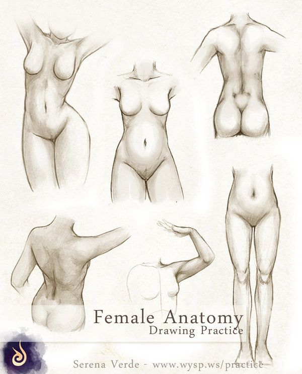 Female Anatomy Drawing Practice by NadezhdaVasile.deviantart.com on ...