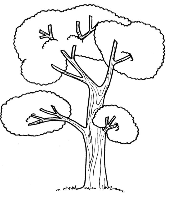 The Big Tree Coloring Page Tree Coloring Page Leaf Coloring