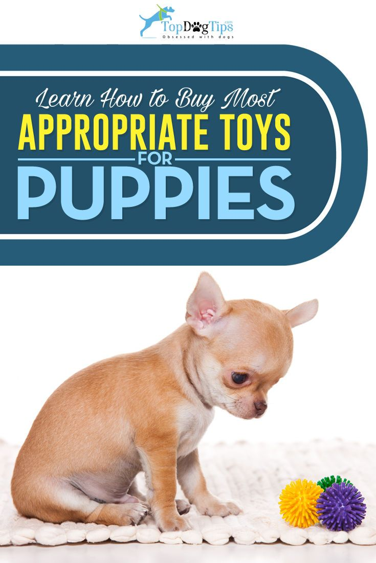 Most Appropriate Dog Toys For Puppies What Pet Owners Must Know