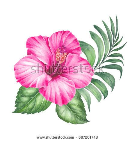 Red Hibiscus Flowers And Palm Tree Leaves Garland Composition Isolated Over White Background Blossom Hibiscus Flowers Tropical Flower Tattoos Floral Painting